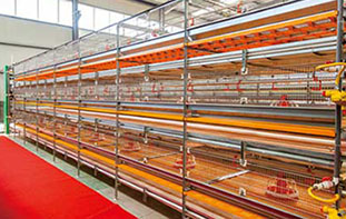 What is structure of full automatic poultry equipment and layer chicken cage in poultry farm