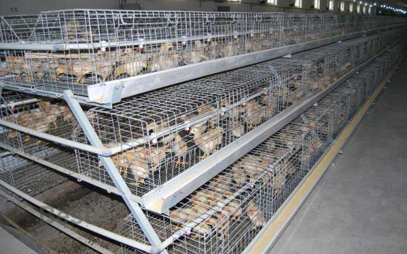Chick Cage Featured Image